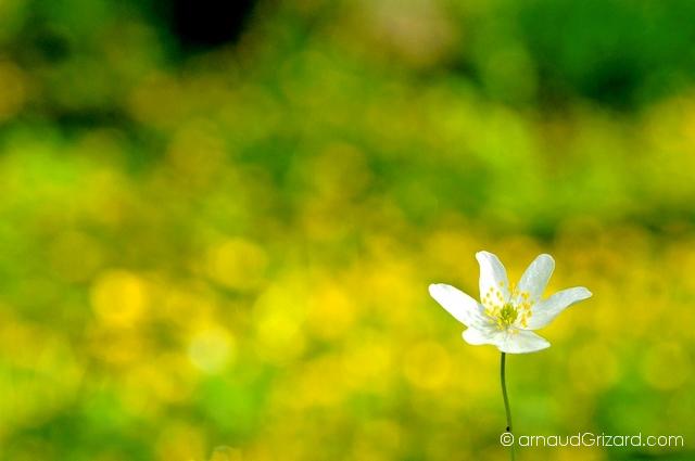 printemps-2