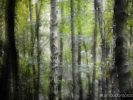 la forêt des mystères
