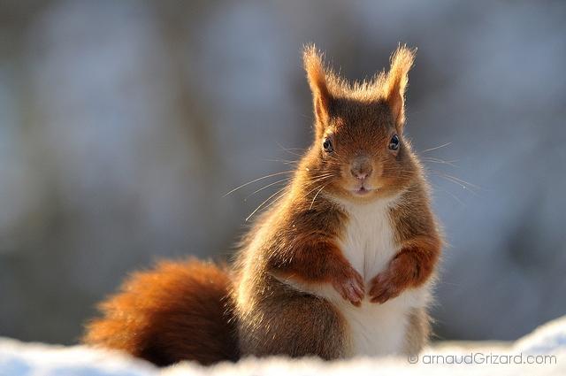 ecureuil-10