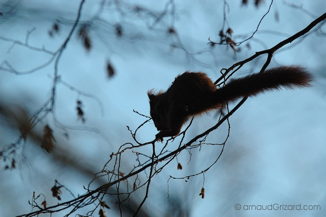 ecureuil-8
