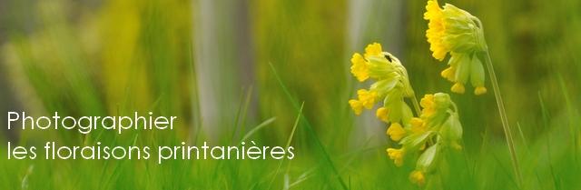 flore-printemps-baniere