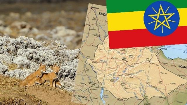 ethiopie crop bis