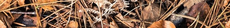 Litière de sous bois