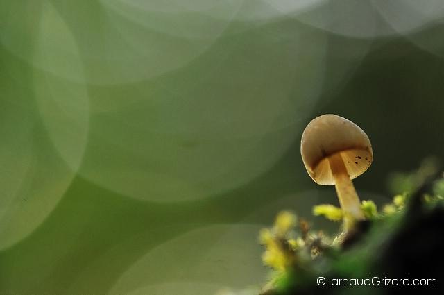 Fungicolor