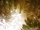 Mystic fern