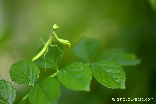 Vert sur vert