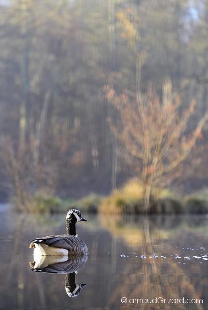 Au bord de l\'étang