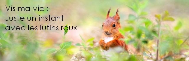 ecureuil-banderole