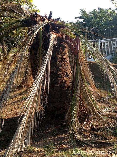 palmier malade-border