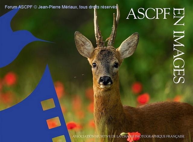portfolio ASCPF